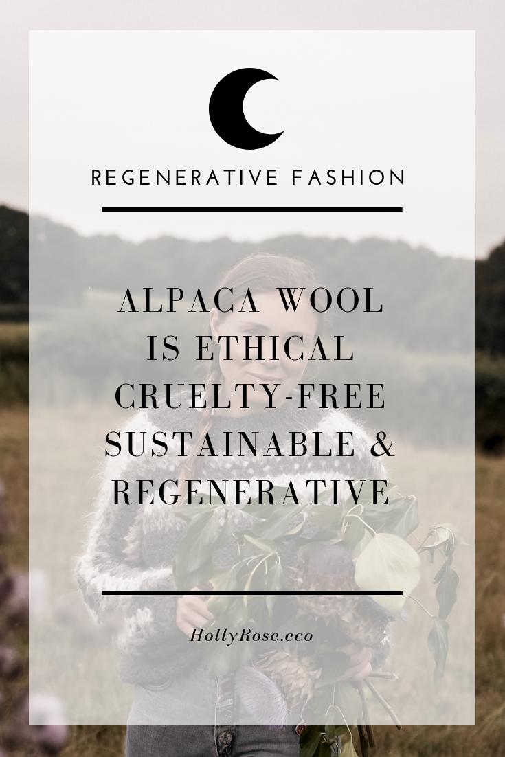 is alpaca wool vegan, is alpaca wool cruelty free, are alpacas killed for their fur, alpaca wool sweater, alpaca sustainability, peruvian alpaca, alpaca wool, cruelty free wool, is alpaca wool cruelty free, environmental impact of alpaca, alpacas are the greenest animal, alpaca environment, alpaca sustainable, alpaca luxury, alpaca cruelty free, regenerative fiber, regenerative fibre, regenerative alpaca, regenerative fashion, sustainable fashion,