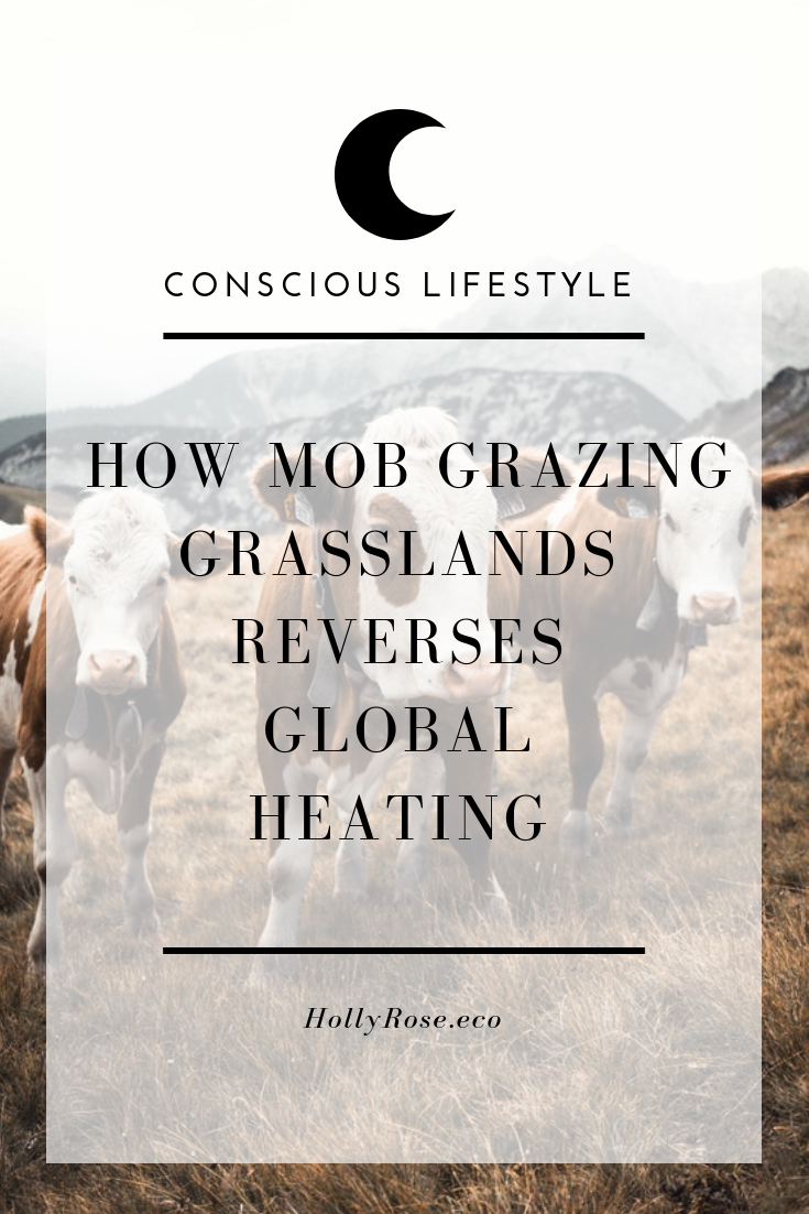 global heating, climate breakdown, global warming, climate change, mob grazing, holistic planned grazing, regenerative agriculture, grass land regeneration, regenerative farming, regenerative living, #eat4climate, regenerative blogger, ethical blogger, sustainable blogger, green blogger, leotie lovely, holly rose, conscious lifestyle, conscious consumer, conscious eating, green eating, green beef, sustainable beef, sustainable meat, ethical meat, regenerative vegan, regenerative lifestyle