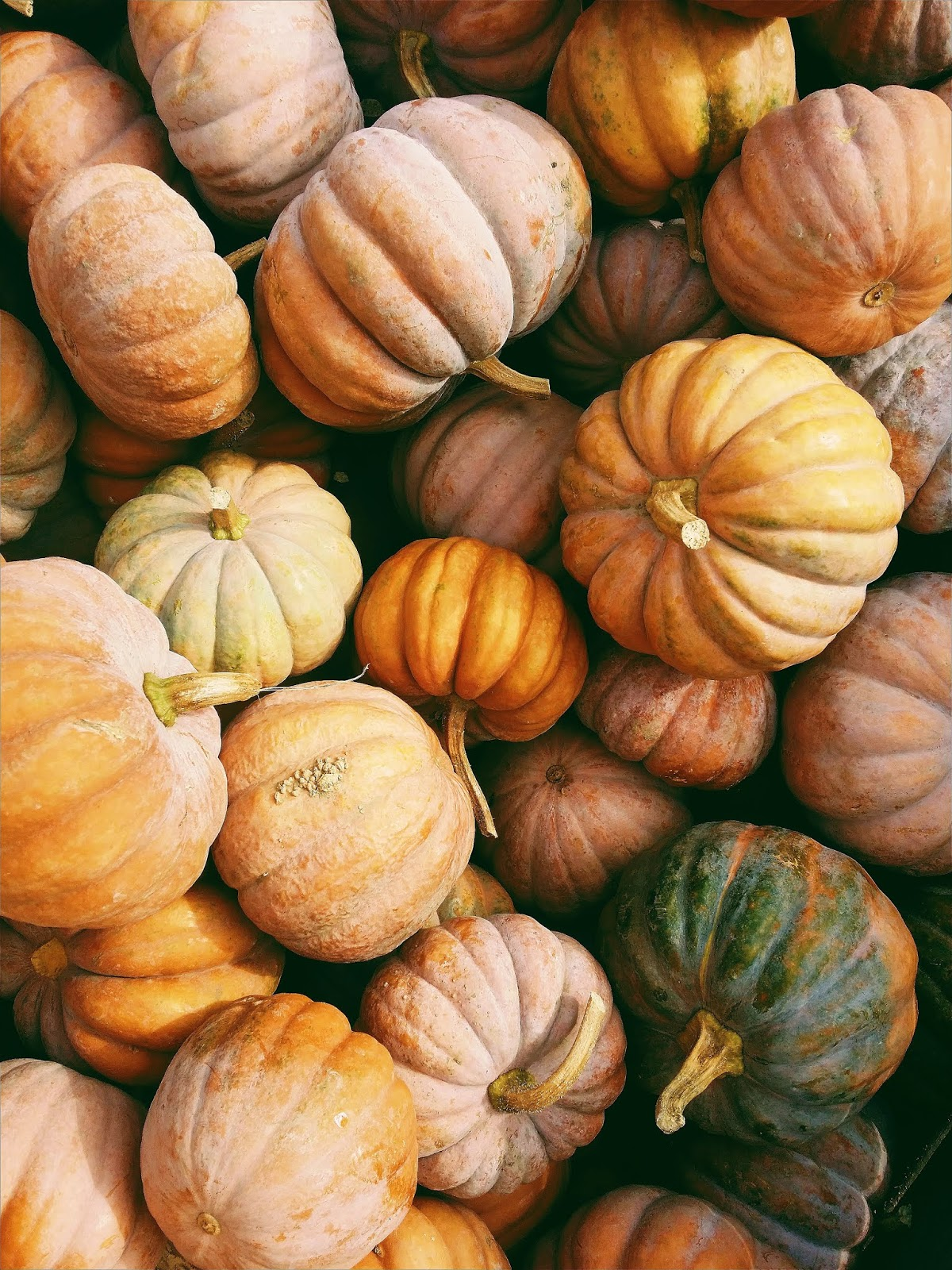 Pumpkin Rescue, jack-o'-lantern waste, food waste uk, halloween food waste, food waste problem, food waste problem in the world, food waste facts, food waste solutions, food waste articles, how to reduce food waste, food waste facts 2019, project drawdown, pumpkin recipes, pumpkin benefits, pumpkin carving, pumpkin nutrition, pumpkin halloween, pumpkin soup, pumpkin pie, food waste articles, food waste definition, essay on food wastage, food waste solutions, is food waste really a problem, why is food waste a global issue, facts about food waste at home, causes of food wastage, food waste uk, spending food waste apps, uk household food waste uk food waste, food waste ideas, why should we save food, food waste articles 2018, farm food waste food that gets thrown away, food waste in production, food waste capitalism, uk food waste management, toast ale, food waste statistics 2018
